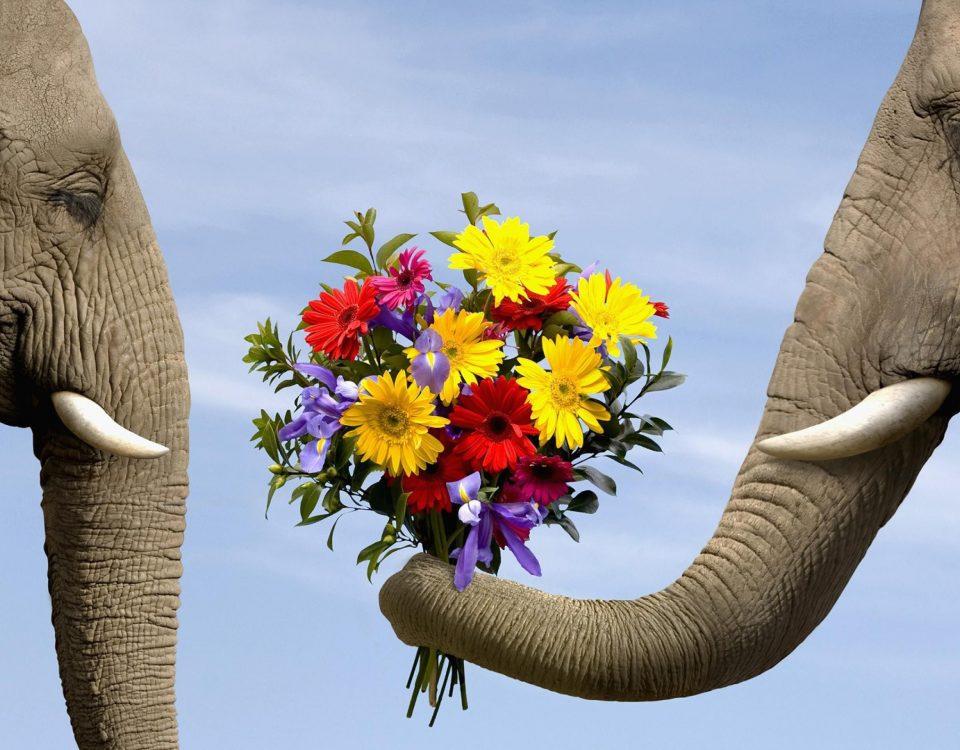 Covenant-Blog-Love-Elephant