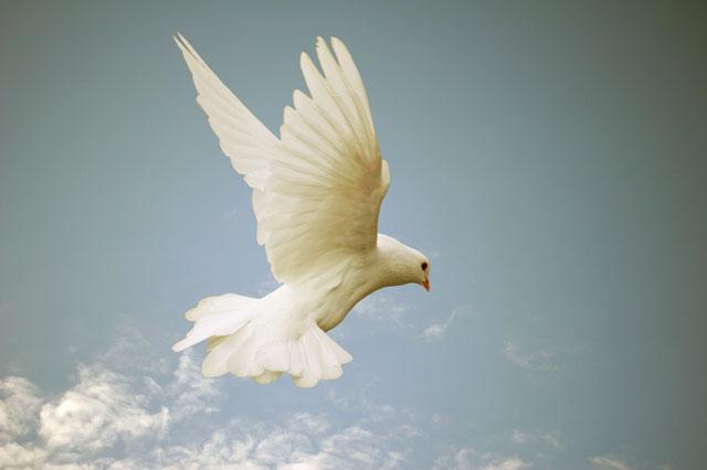 holy spirit come photo of dove at covenant fellowship church okc blog